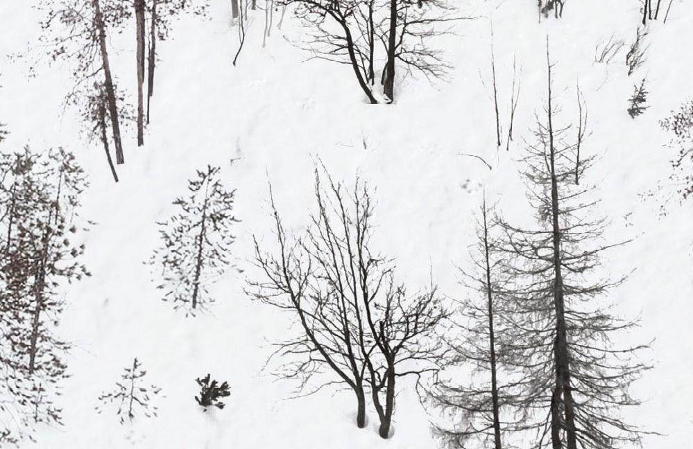 Festa - I figli del bosco(1)