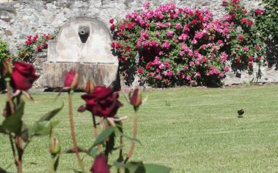 Storie di rose, memorie, sogni (e segni)