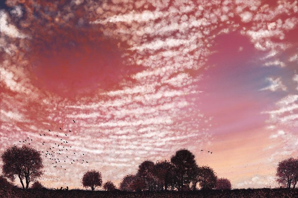 Nuvolario_susyzanella_Cirrocumulus Stratiformi_tramonto